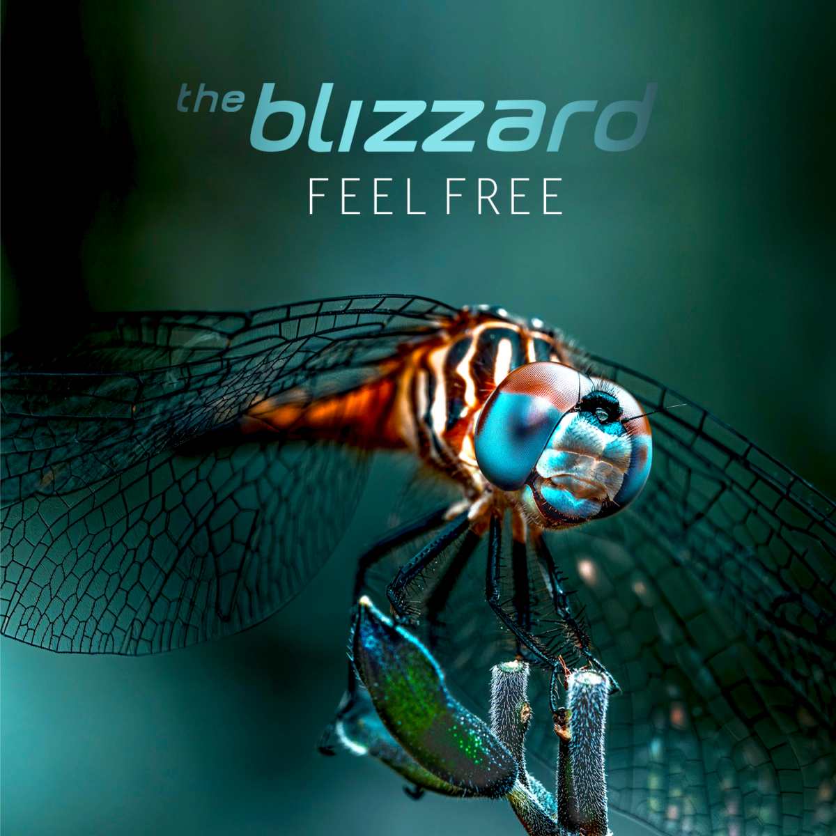 The Blizzard - Feel Free